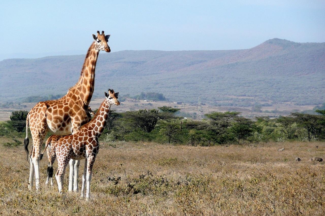 Turystyka w Kenii