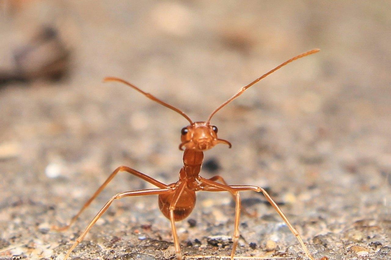 mrowki w ogrodzie